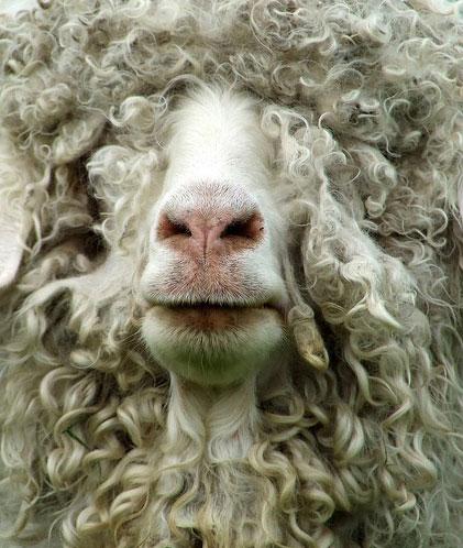 best goat ever.jpg